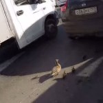This Biker Helped A Duck Family Cross The Highway!