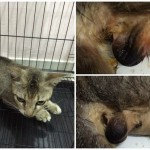 Spay-Neuter Sponsorship For 5 Cats (Janet Chang Beng Hong's)