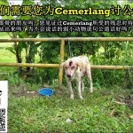 有关提告前狗主虐待Cemerlang事件 About Previous News Regarding Cemerlang's Abuse