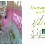 Vaccination Subsidies For 2 Cats, Tiger & 4B (Pan Vui Jiun's)