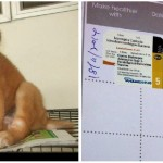Vaccination Subsidies For 3 Puppies (Fan Ching Hooi's)
