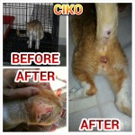 Neutering Sponsorship For Ciko, Male Cat (Muhammad Najib Fadlullah B. Ilias')