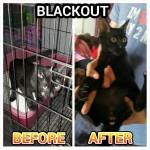 Neutering Subsidy For Blackout, Male Cat (Muhd Najib Fadlullah B. Ilias')
