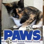 PAWS Animals For Urgent Adoption