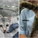 Neutering Aid For 1 Cat In KL (Lim Ai Mooi's)