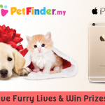 Save Furry Lives & Win Digi IPhone 6 | PetFinder.my