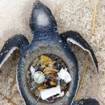 Stunning Images Expose The Horrific Impact Of Plastic Trash On Marine Animals