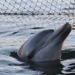 DANANG DOLPHIN PETITION: SIGN NOW And Say No To Captive Dolphins In Danang, Vietnam