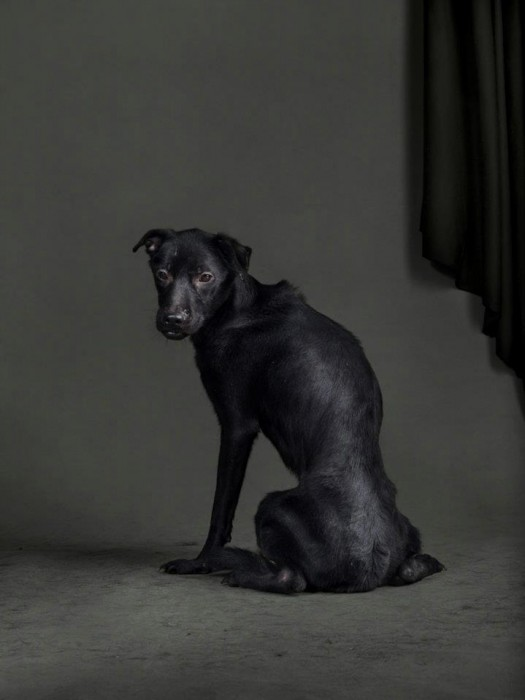 2011/03/07, 04:17am, Taiwanese Public Shelter, Time until Euthanized: 13.2 Hours