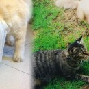 Catty First Impressions: Introducing A New Cat To Your Household Felines