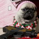 Home Alone (Cute Puggy Version)