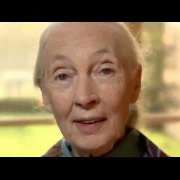 Forest Is Calling: Dr. Jane Goodall Urges Us To Re..
