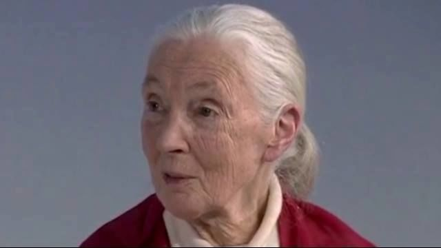 Jane Goodall: Everyone Can Make An Impact On The P..