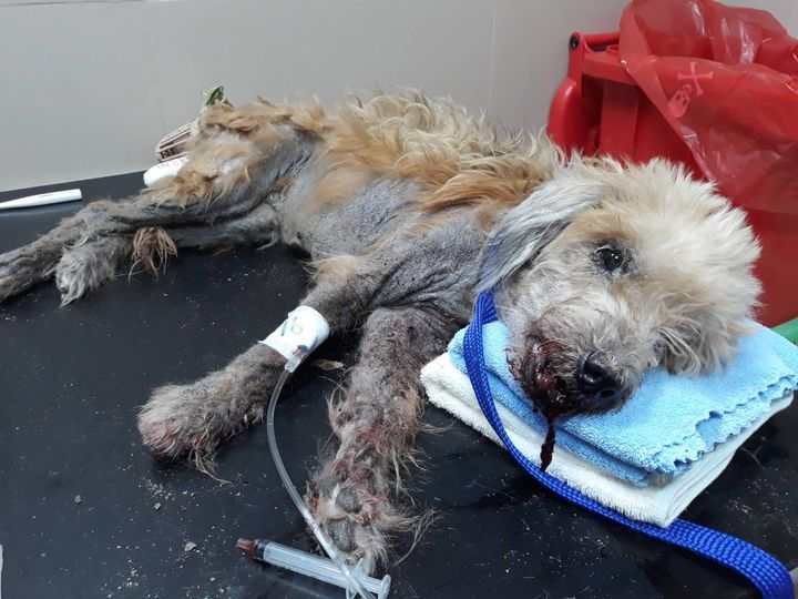 Graphic Images Abandonment Is A Crime, And Poor Gr..