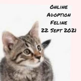 Feline For Adoption 20921. To Adopt, Send Us A Mes..