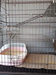Home Based Cat Boarding Services -