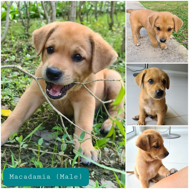 Macadamia - Mixed Breed Dog