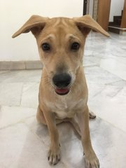 Peanut - Mixed Breed Dog