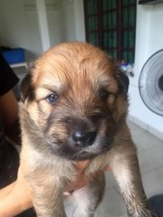 Ba-gel - Mixed Breed Dog