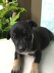 Puppy For Adoption - Mixed Breed Dog