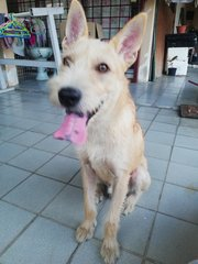 Pipi - Mixed Breed Dog