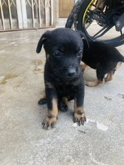 Puppy 9 - Mixed Breed Dog
