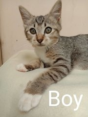 Boy And Girl - Domestic Short Hair Cat