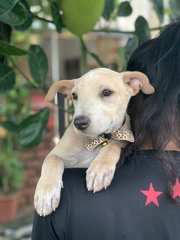Chippa Boy - Mixed Breed Dog