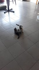 Sweetie And Kittens  - Found At Gm Mall  - Domestic Medium Hair Cat