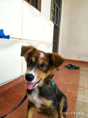 Cutie From Klang! - Mixed Breed Dog