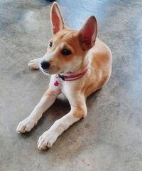 Agaleya Sivakumar - Mixed Breed Dog