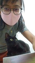 Blackie - Domestic Short Hair Cat