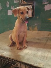 Little Joey - Mixed Breed Dog