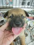 Urgent: Female Puppy 02 - Mixed Breed Dog