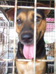 K13- Joey  - Mixed Breed Dog
