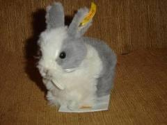 Lion Head Rabbit For Adoption - Lionhead Rabbit