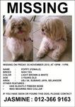 POPPY Lost In USJ 3 Subang Jaya - Shih Tzu Dog