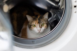 This washing machine is mine, please go use the sink, the exercise will do you good!