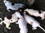 Puppies Urgently Need Home - Mixed Breed Dog