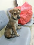 ♡fifi♡▶ ( 2 Months ) - Mixed Breed Dog
