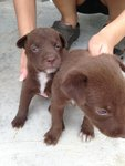 9 Puppies For Adoption - Mixed Breed Dog