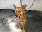 D5(281210) - Mixed Breed Dog