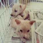 Teddy & Bear - Mixed Breed Dog