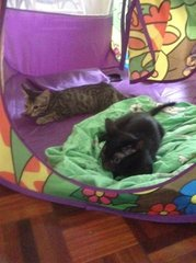 Tabbie & Coffee chilling in their playpen