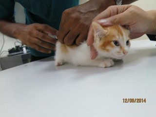 Vaccinated on 12 September 2014