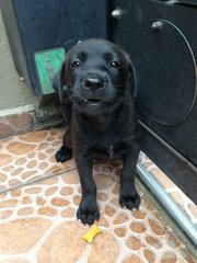 All Black Puppy - Mixed Breed Dog