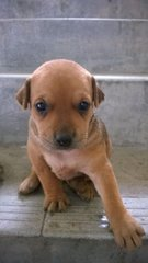 PF63918 - Mixed Breed Dog