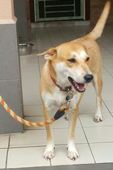Sheno  - Mixed Breed Dog