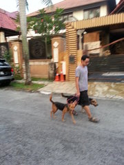 Rover and Lady going for a walk.