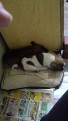 Patches And Charlie - Mixed Breed Dog